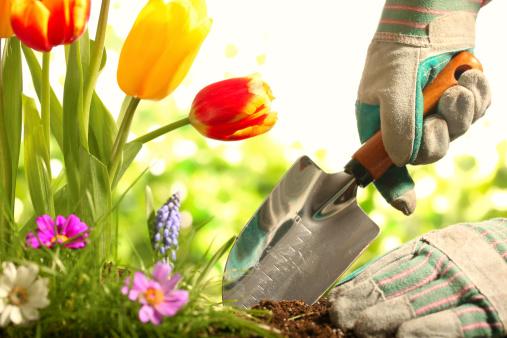 cours de jardinnage