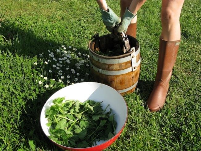 alternatives-pesticides